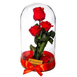 Örökrózsa üvegbúrában - Piros csokor