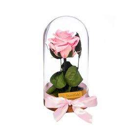 Örökrózsa üvegbúrában - Rózsaszín