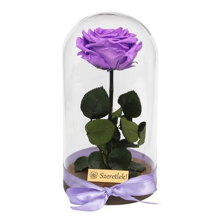 Örökrózsa üvegbúrában - nagy méretű élénk lila