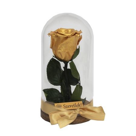 Örökrózsa üvegbúrában - arany színű rózsafejjel