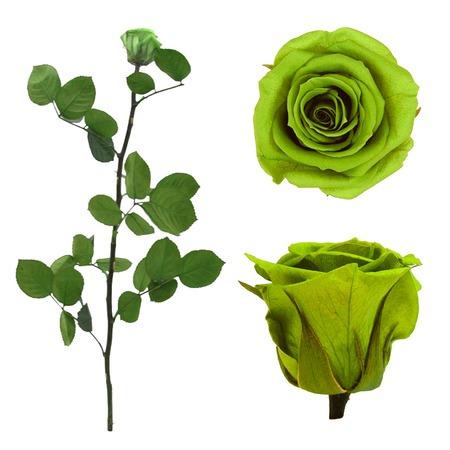 Örökrózsa díszdobozban lime zöld - közepes