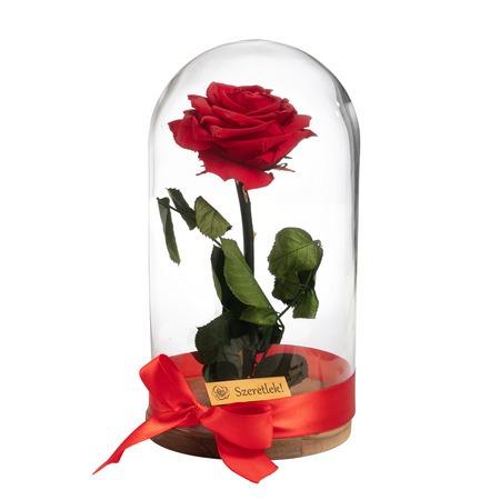 Örökrózsa üvegbúrában - nagy méretű piros örök rózsa
