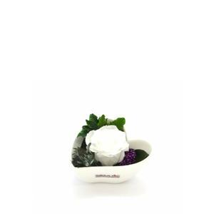 Smeraldino fehér örökrózsa szív kaspóban