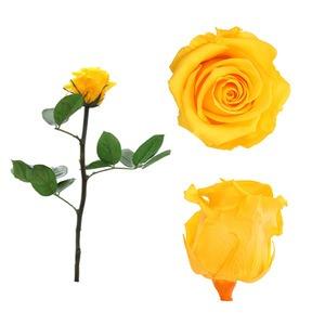 Örökrózsa díszdobozban sárga - kicsi