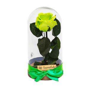 Örökózsa üvegbúrában - lime green