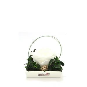 Smeraldino nagyméretű fehér örökrózsa kerámia tálban
