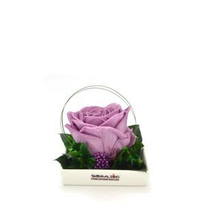 Smeraldino nagyméretű lila örökrózsa kerámia tálban