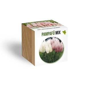Pampafű Mix növényem fa kaspóban